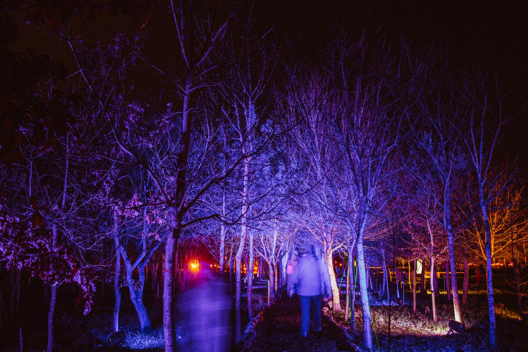 Visitors walk through woodland during Illuminated Arboretum 2019