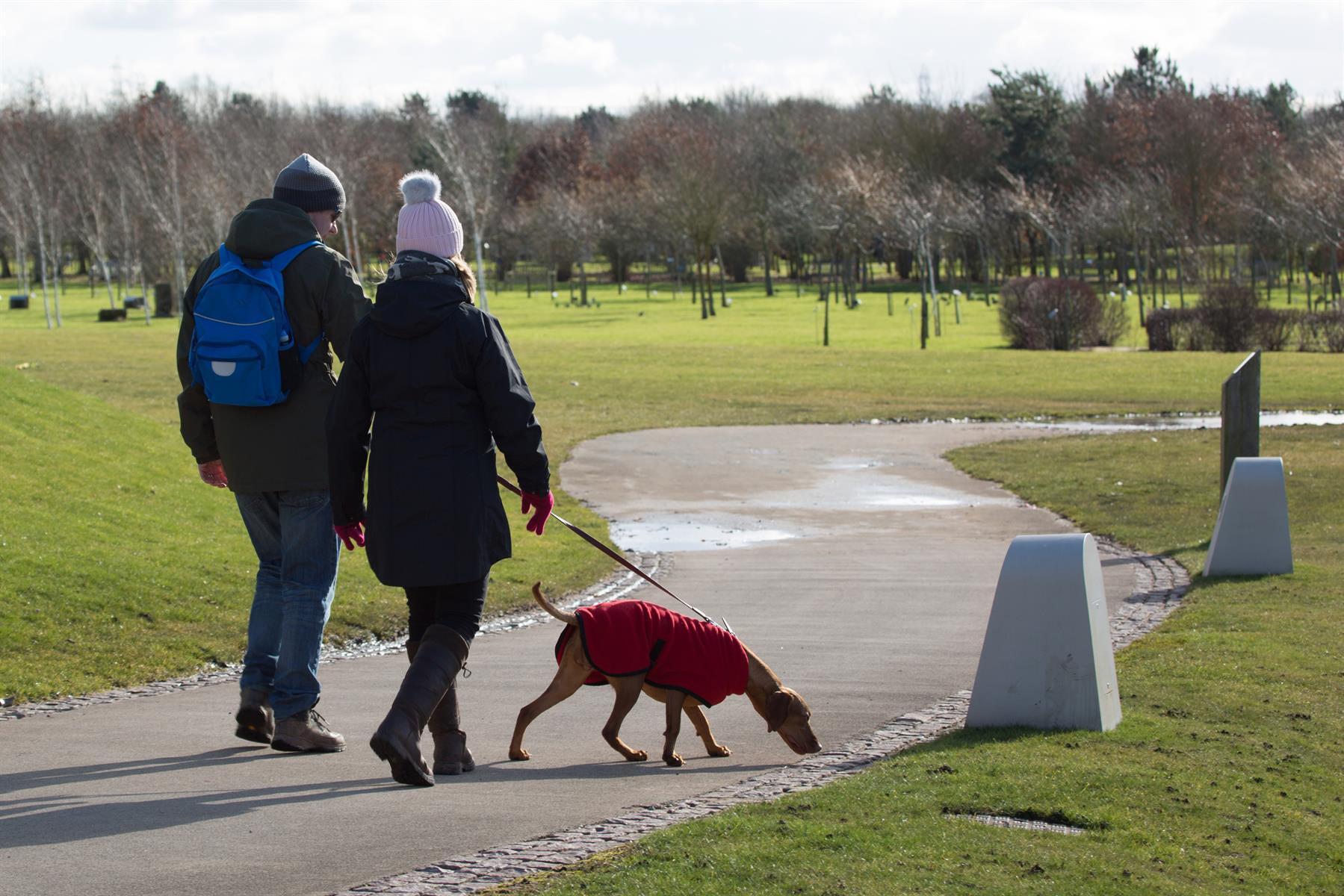 Dogs at the Arboretum