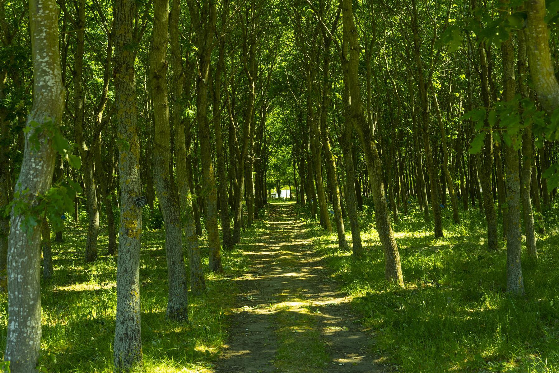 Wellbeing Woodland