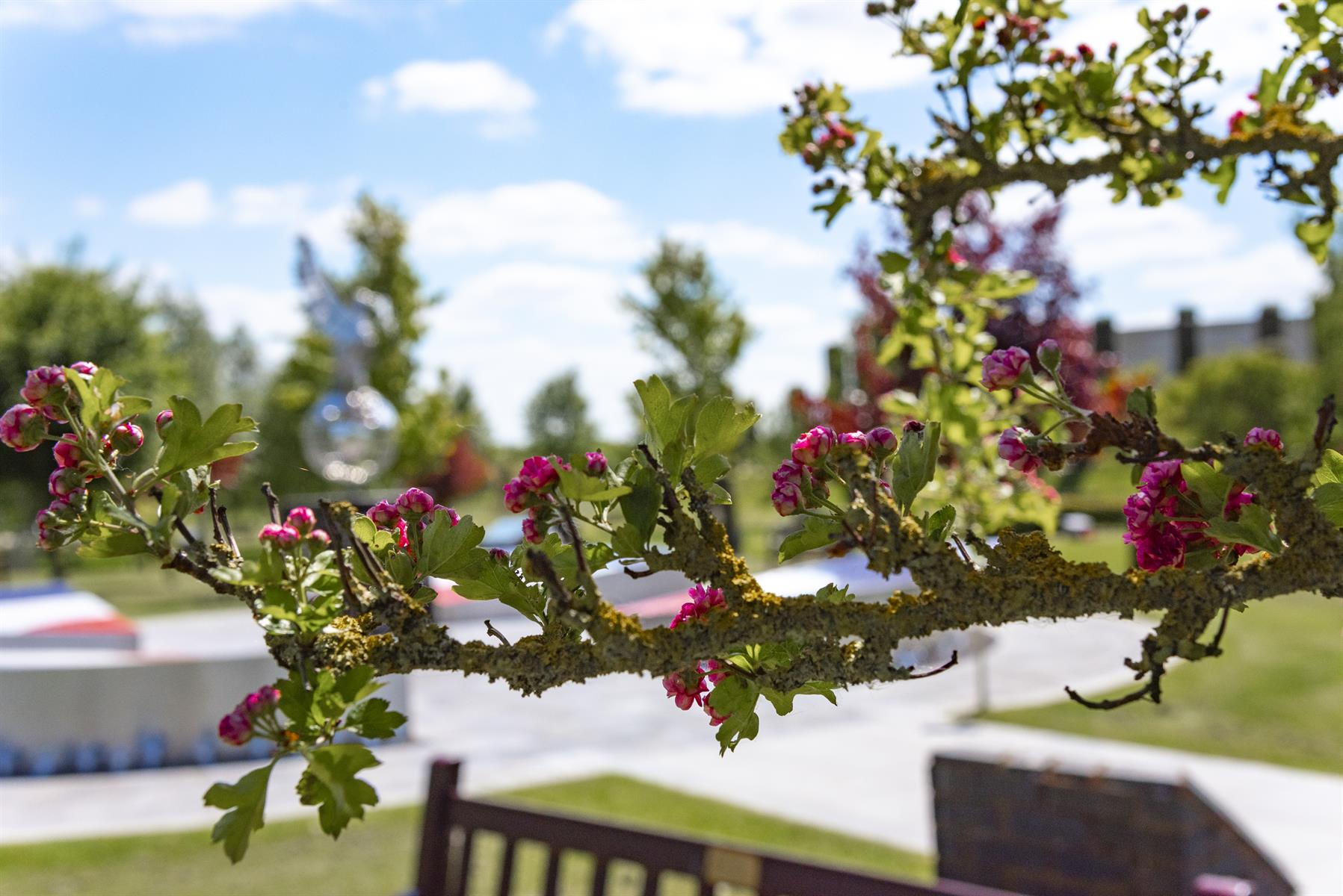 Close up of Tree Blossom