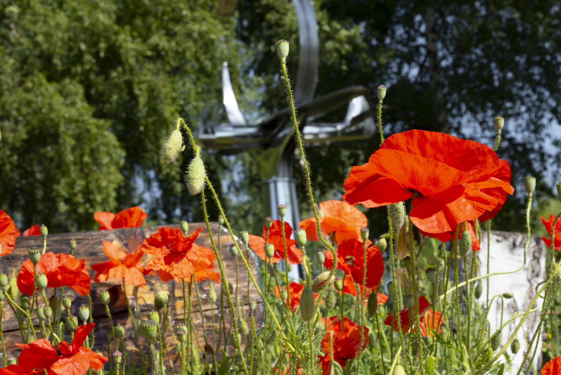 Poppies close up in front of Pegasus Bridge Memorial